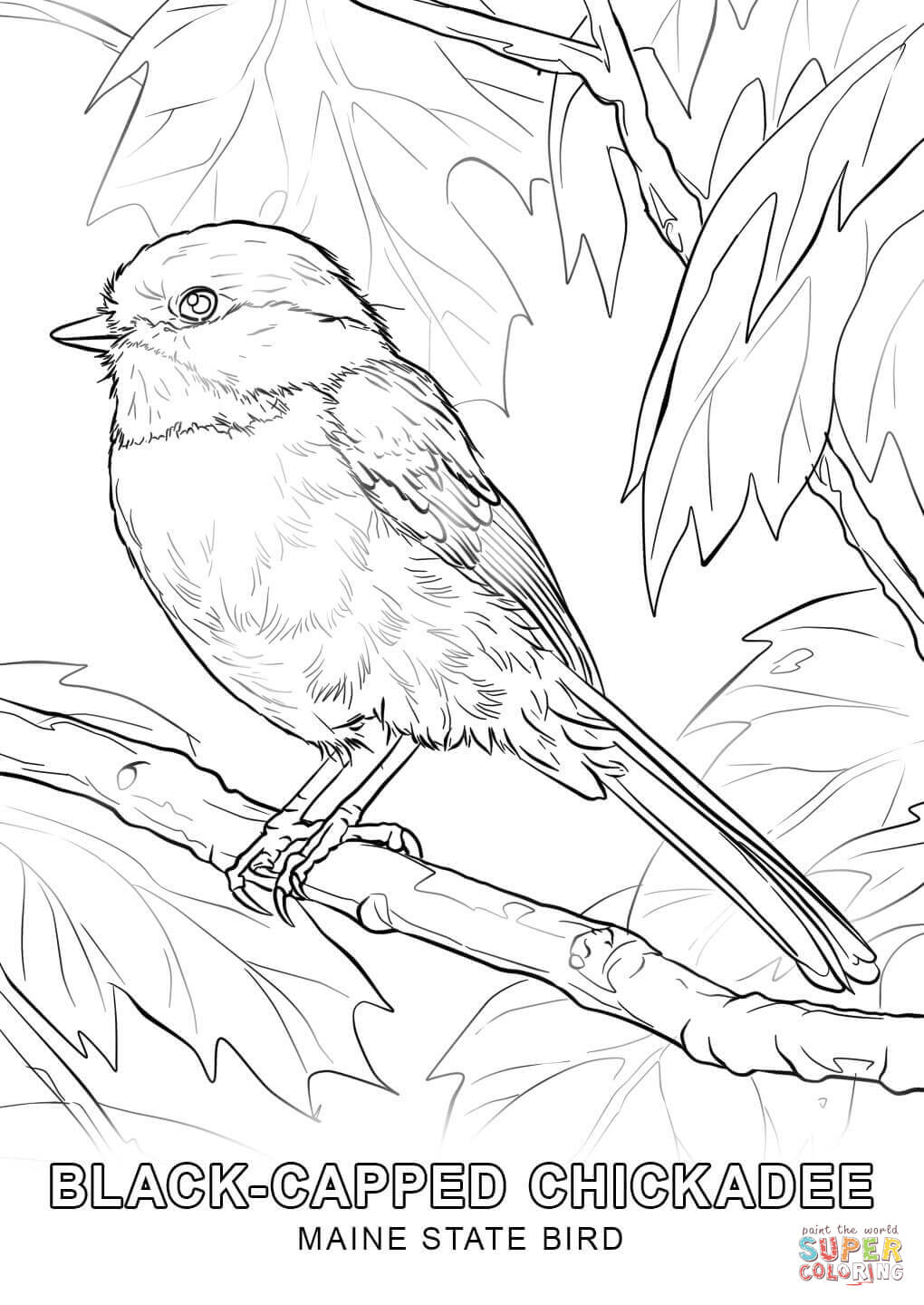 printable coloring pages arizona state bird coloring page alabama state bird coloring page coloring