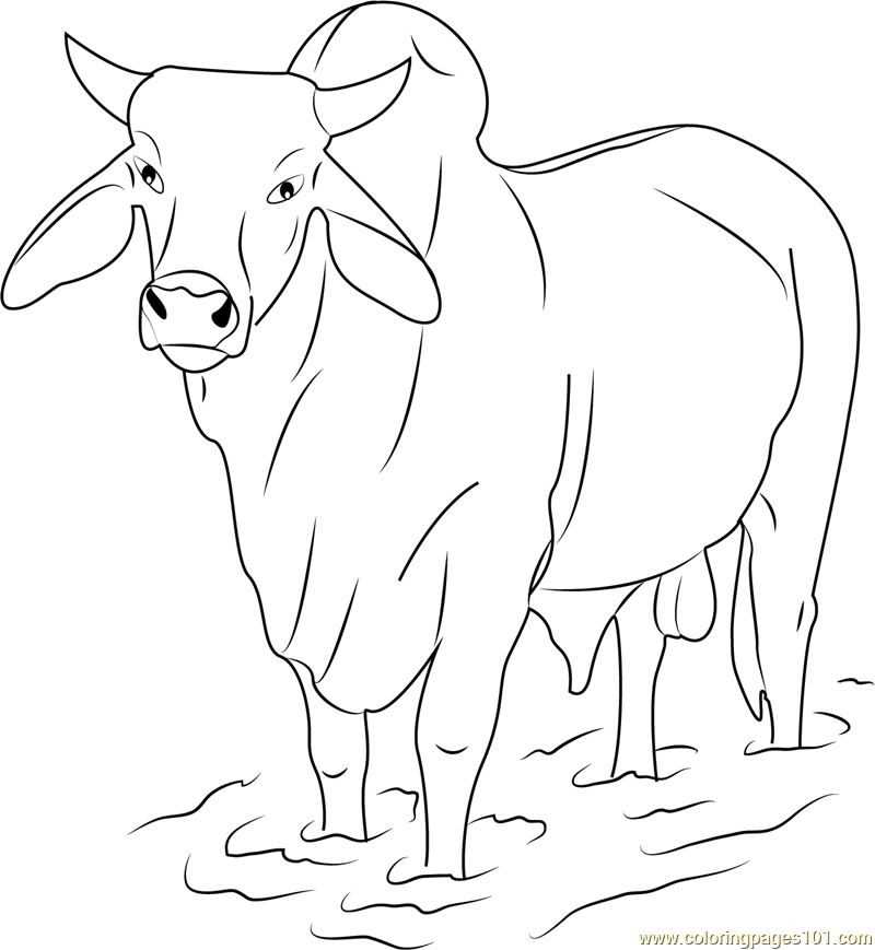 Bull Printable Coloring Pages Coloring Home