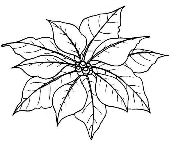 Free Christmas Holiday Detailed Patterned Poinsettia Coloring Page ... | 494x600