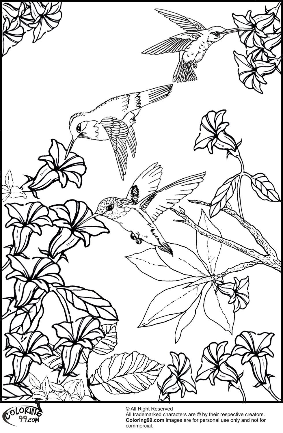 Humming Bird Coloring Page Coloring