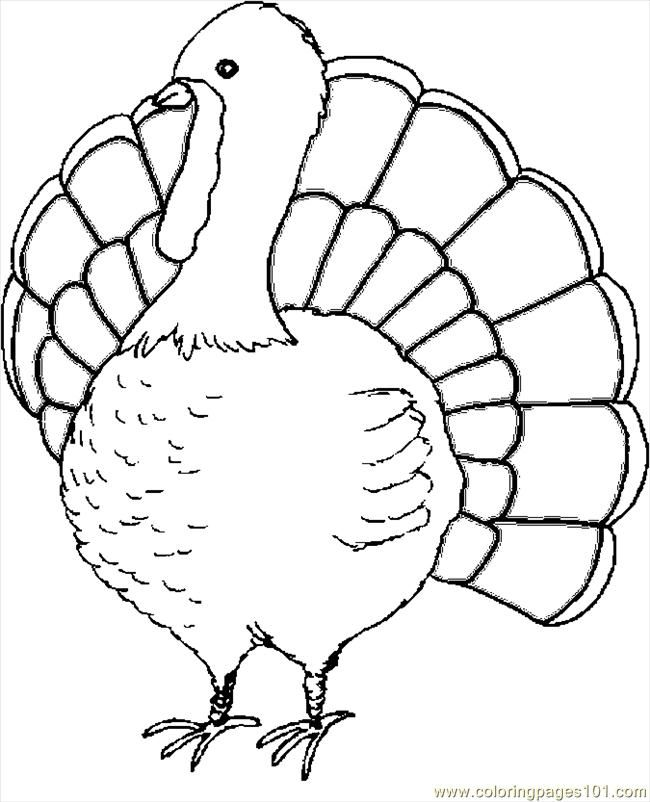 turkey wattle coloring pages - photo#21