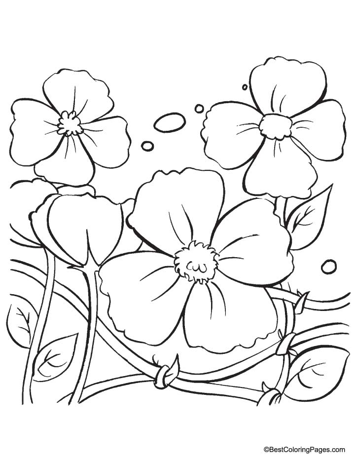 Poppy coloring pages for kids coloring home for Poppy flower coloring page