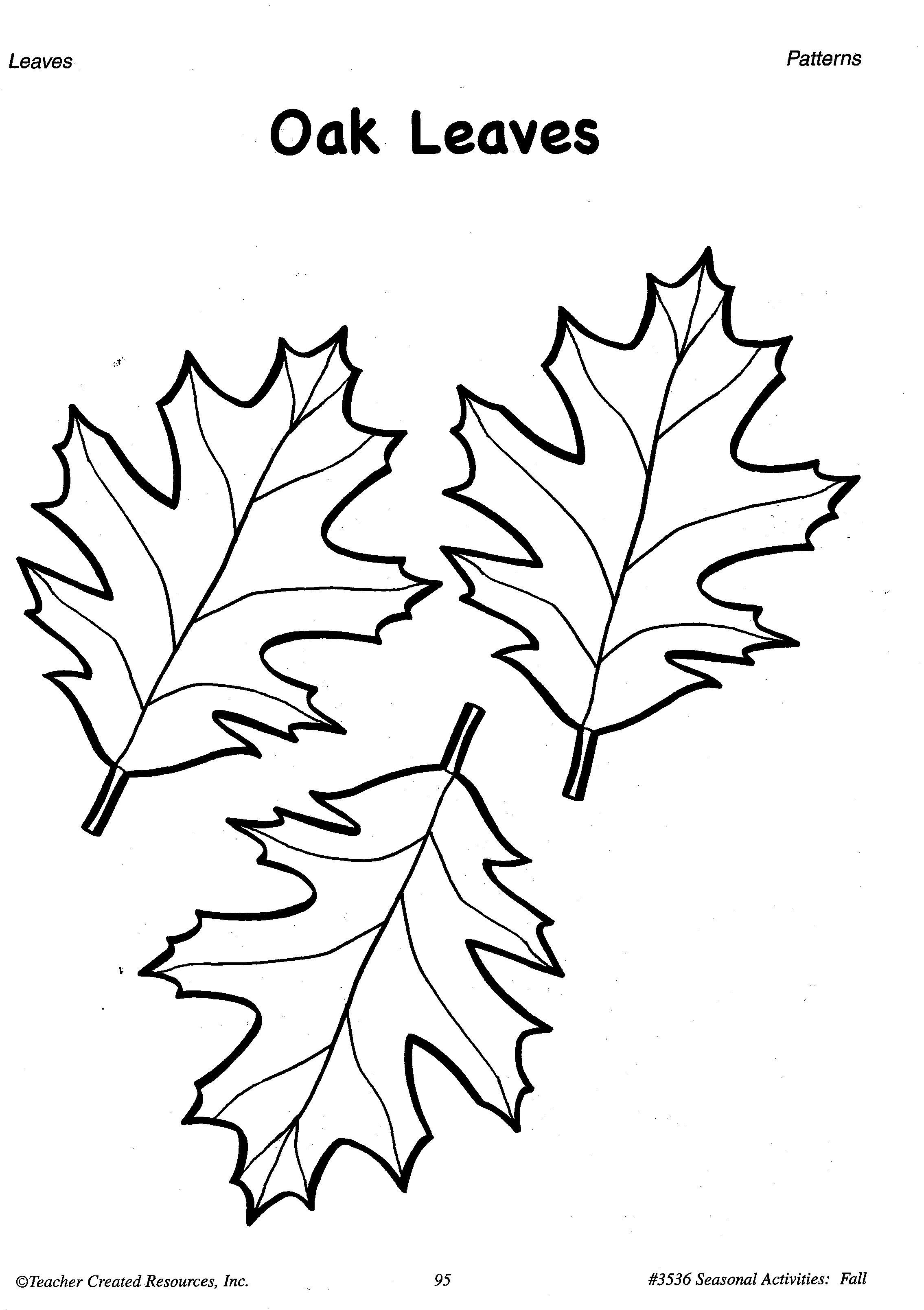 traceable leaf patterns coloring home. Black Bedroom Furniture Sets. Home Design Ideas