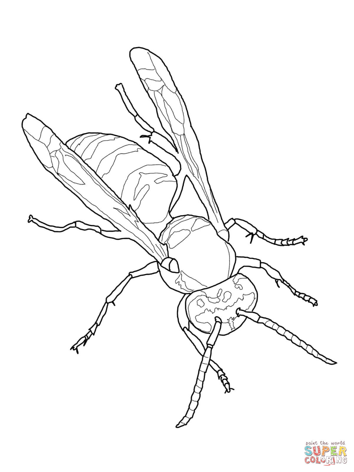 Eastern Yellow Jacket Coloring Page