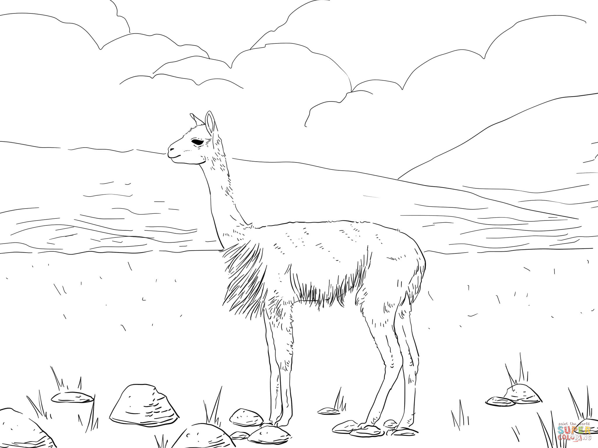 Vicunas South American Camel coloring page | Free Printable ...