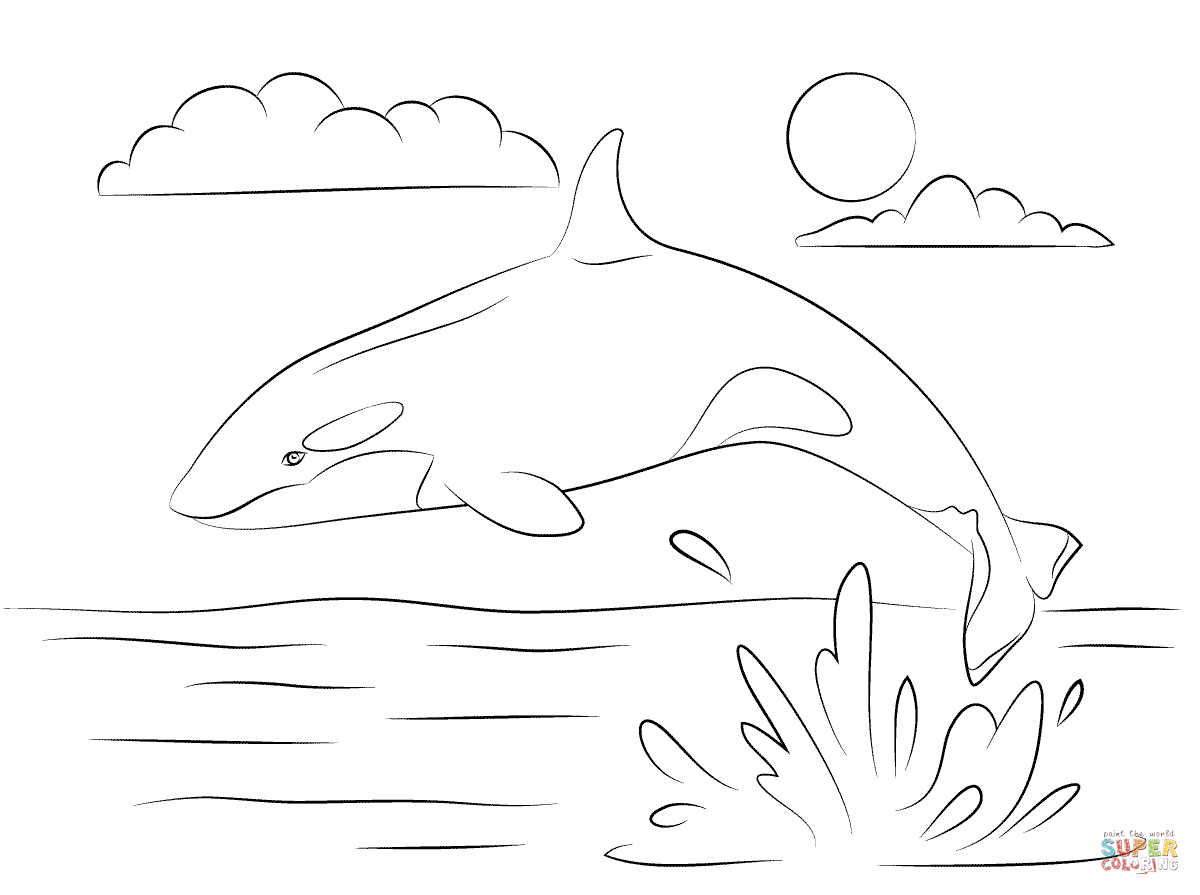Cute Killer Whale Is Jumping Out Of Water Coloring Page Free