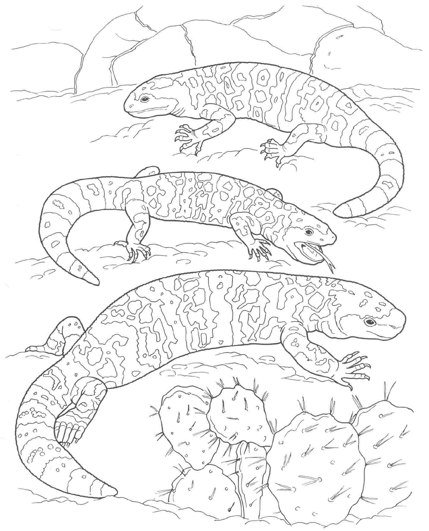 Coloring Pages Plants And Animals : Desert coloring page home