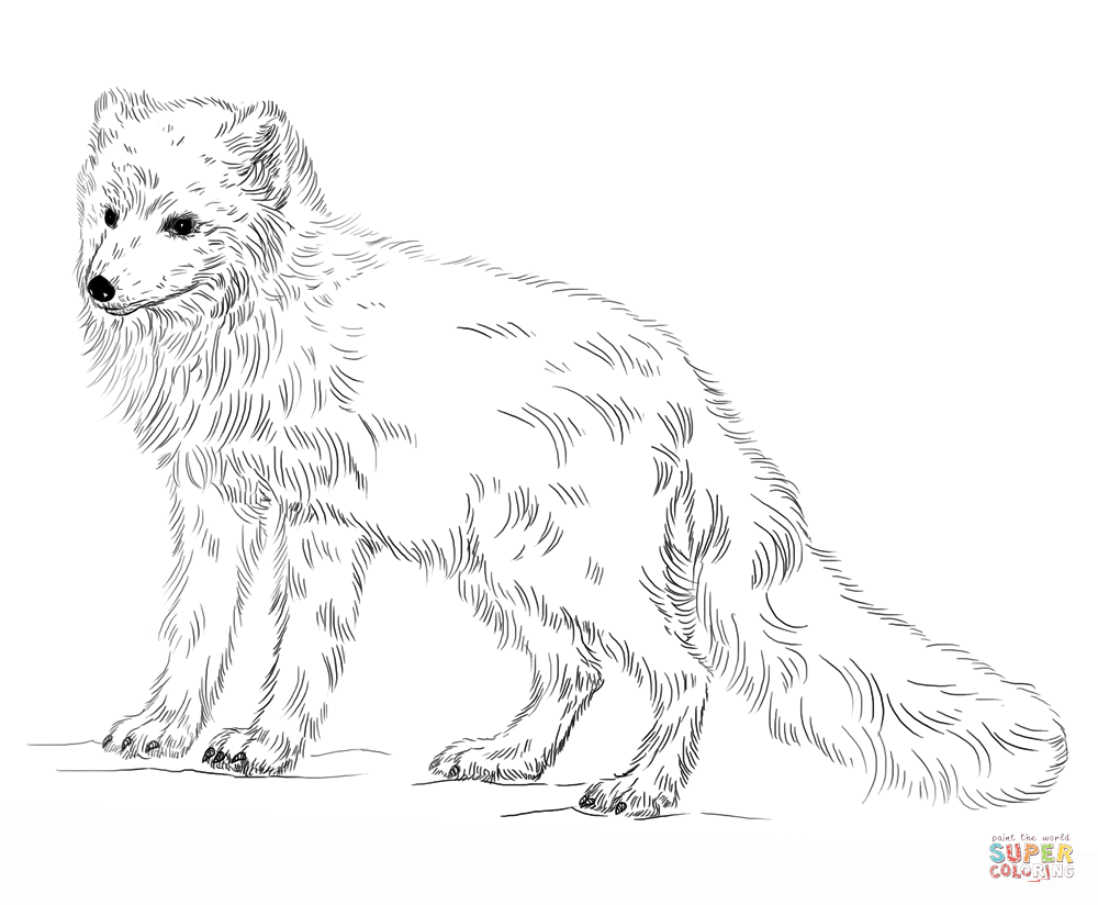 arctic fox coloring page free printable coloring pages - Fox Coloring Pages