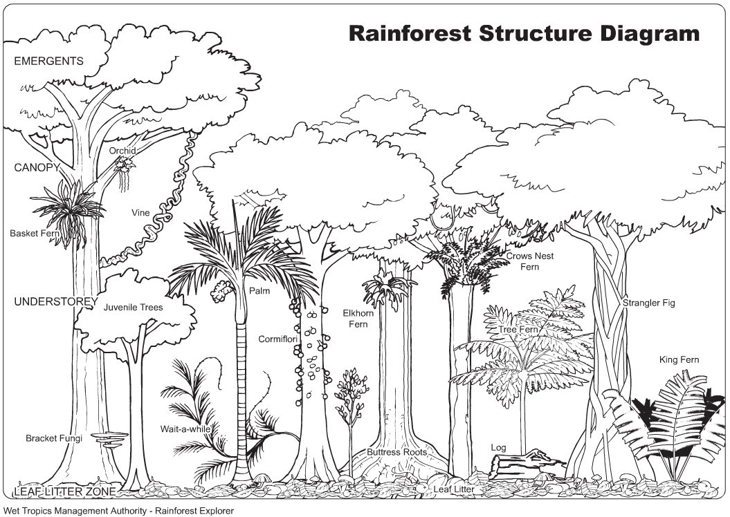Coloring Pages Rainforest Plants Coloring Pages rain forest trees coloring page az pages jungle animals for kids related keywords suggestions jungle