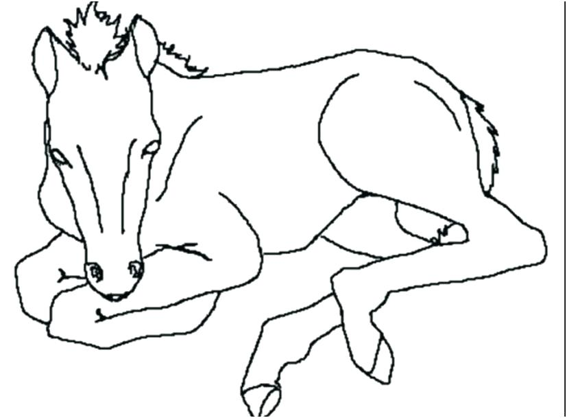 Horse Coloring Pictures   Horse Printable Coloring Pages   Horse ...   609x827