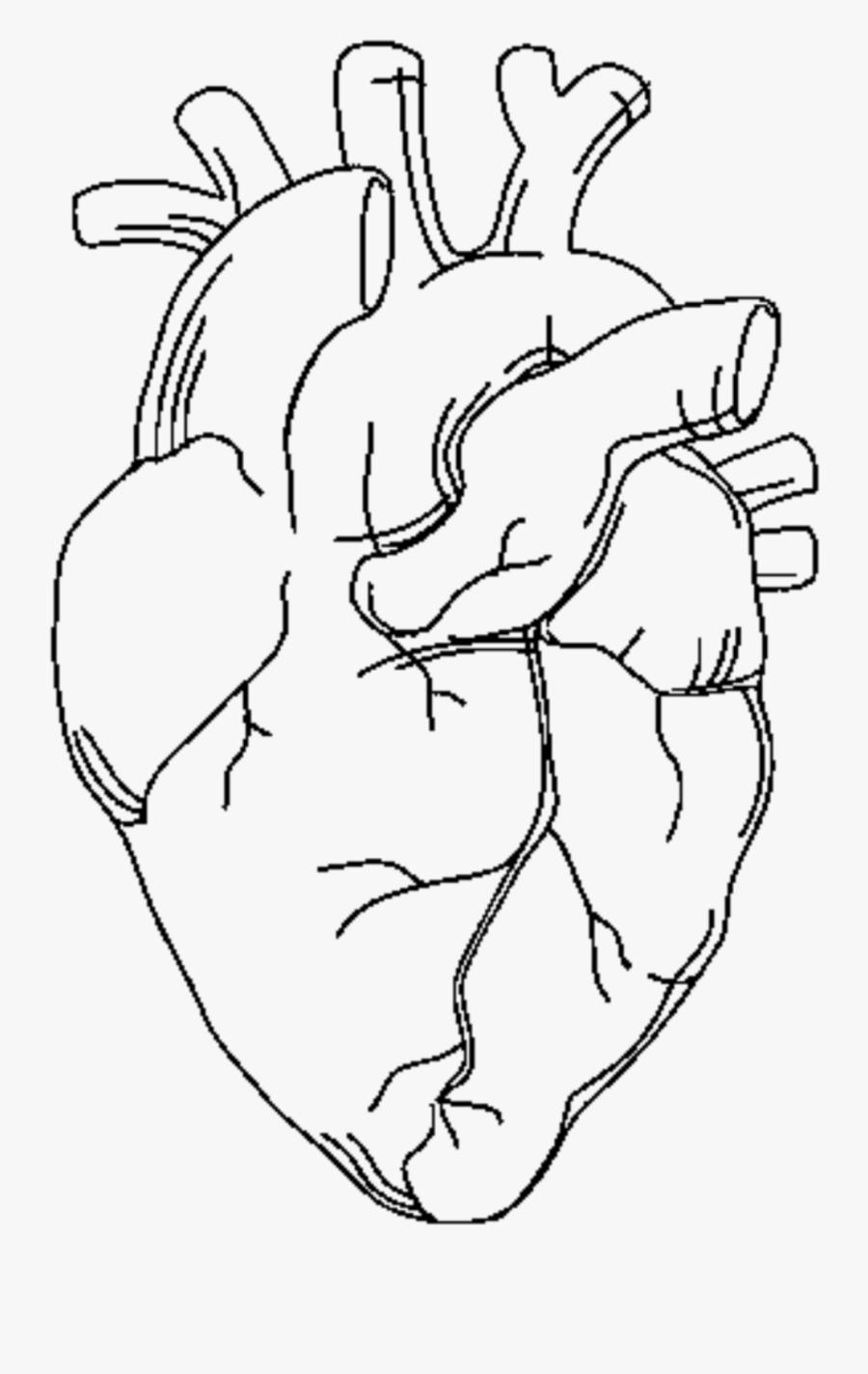 1409109_heart Anatomy Png Anatomicalheart Tattoo ...