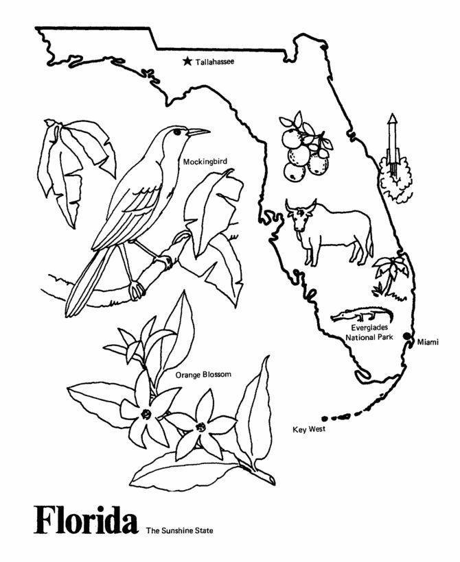 Florida State Outline Coloring Page I Copy The Image And Paste To
