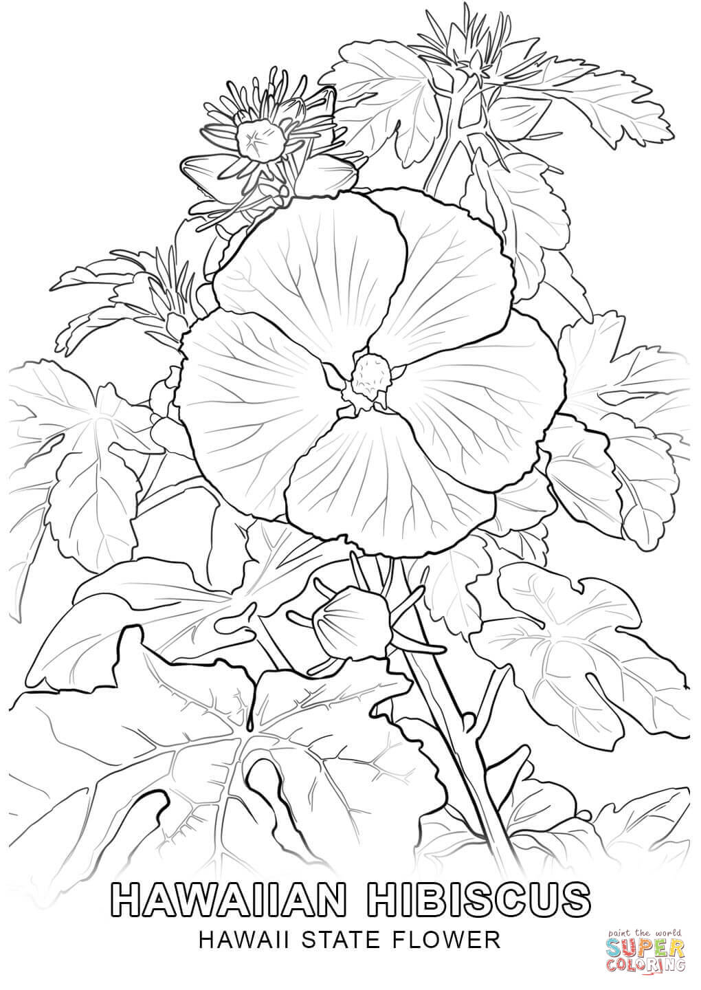 kids hawaii flowers coloring pages - photo#18