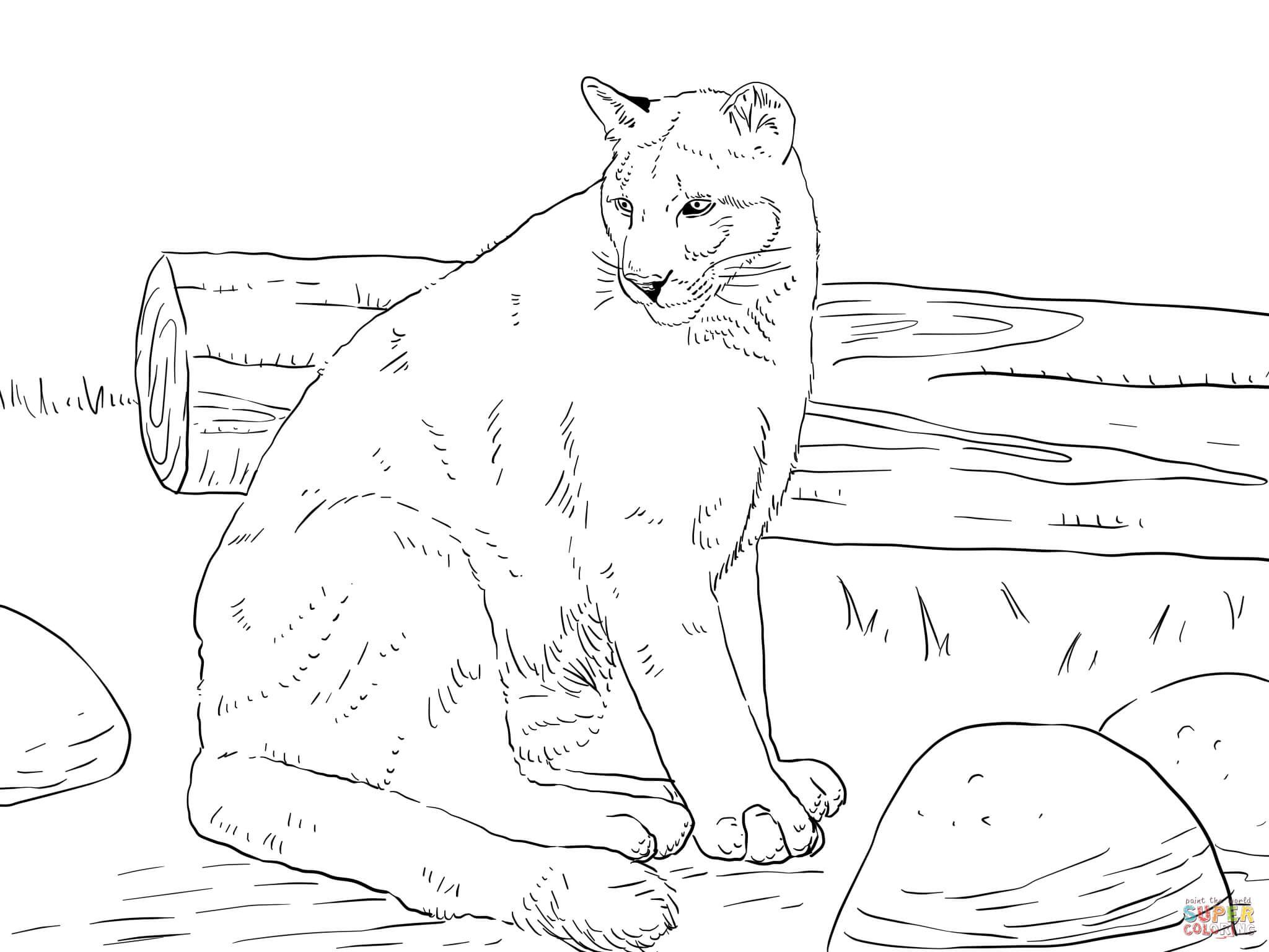 florida panther coloring page  free printable coloring