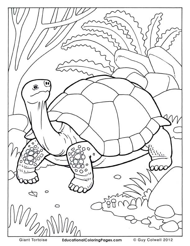 galapagos coloring pages - photo#20