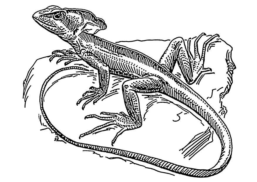 Basilisk Lizard Coloring Page Az Coloring Pages