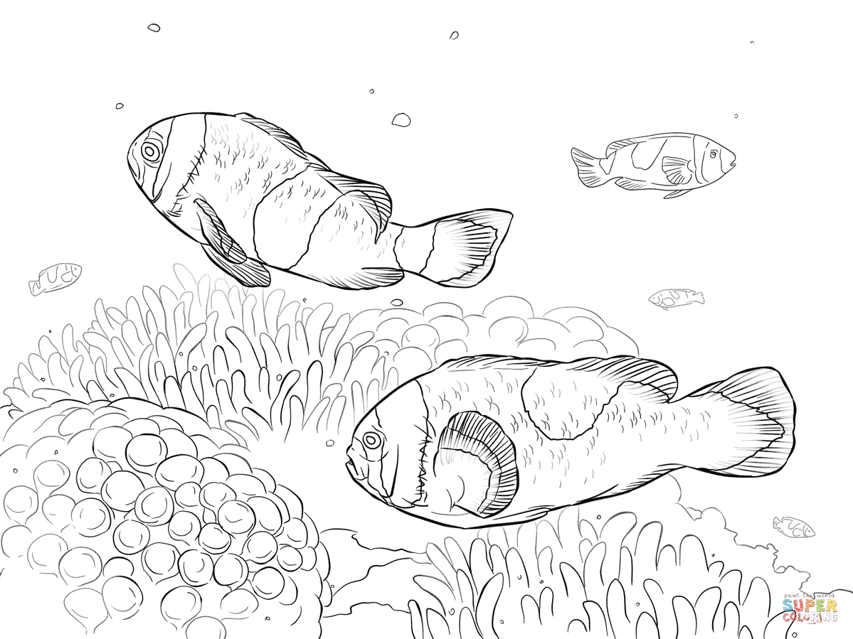 Clownfish coloring pages | Free Coloring Pages