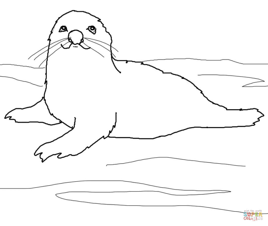Baby Harp Seal Coloring Page Free Printable Coloring Pages