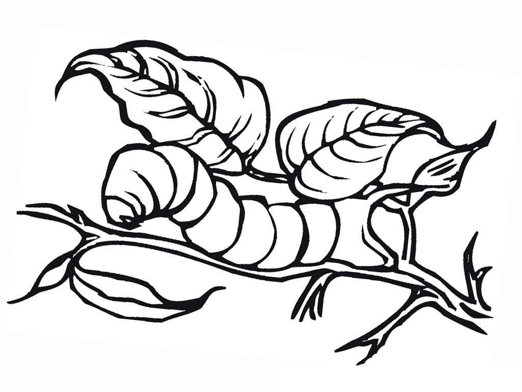 Insects For Kids Coloring Pages - Coloring Home