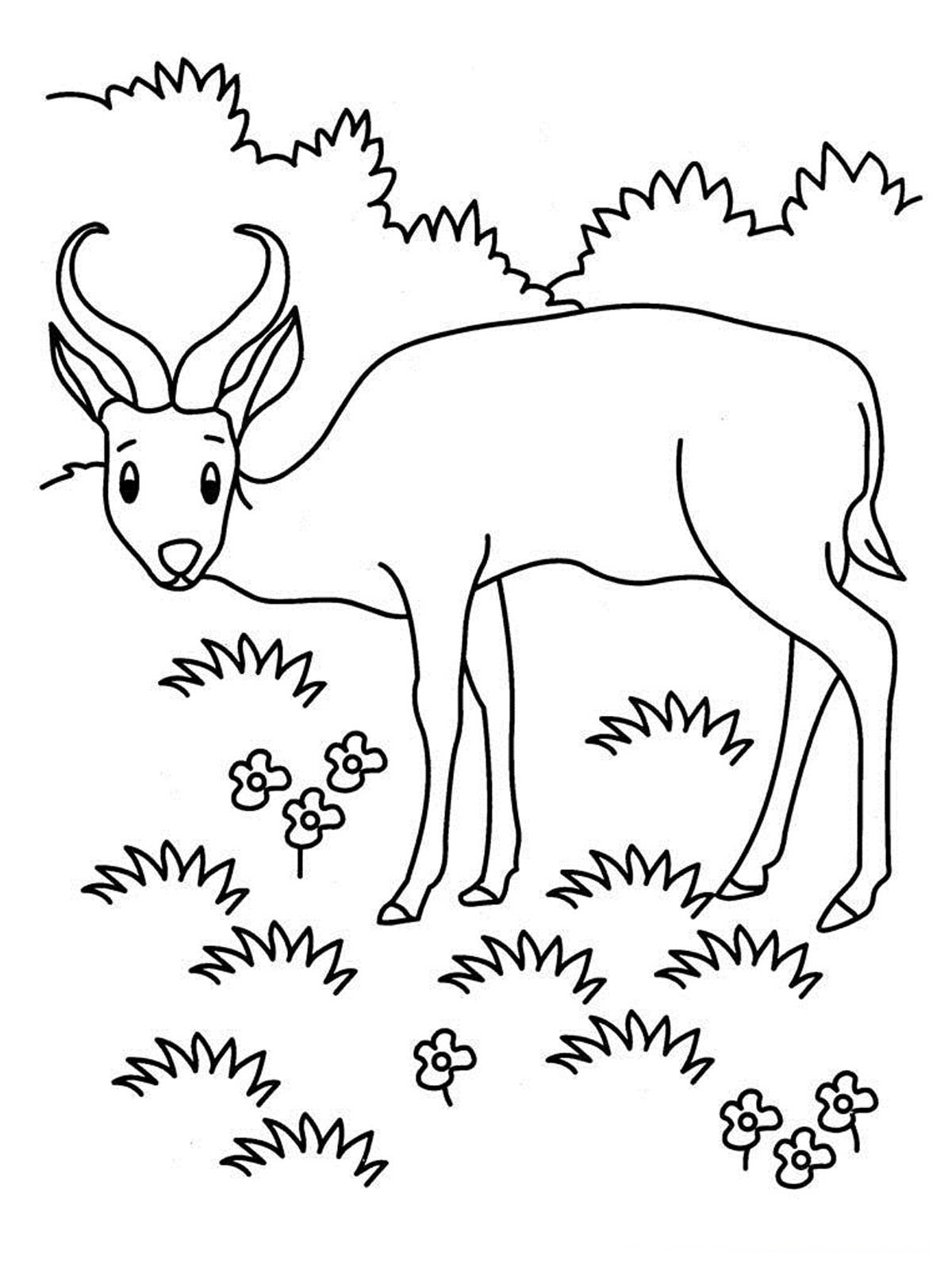 Grassland Coloring Pages - Coloring Home