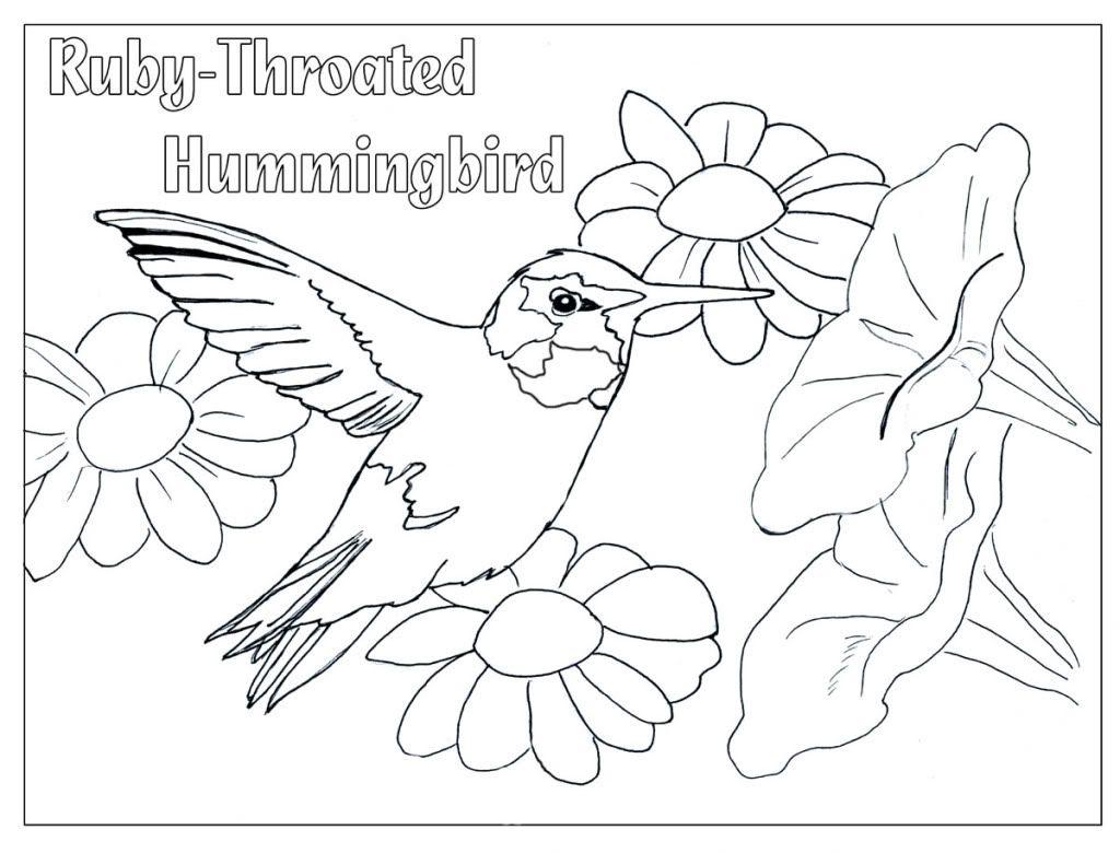 Humming Bird Coloring Page Coloring