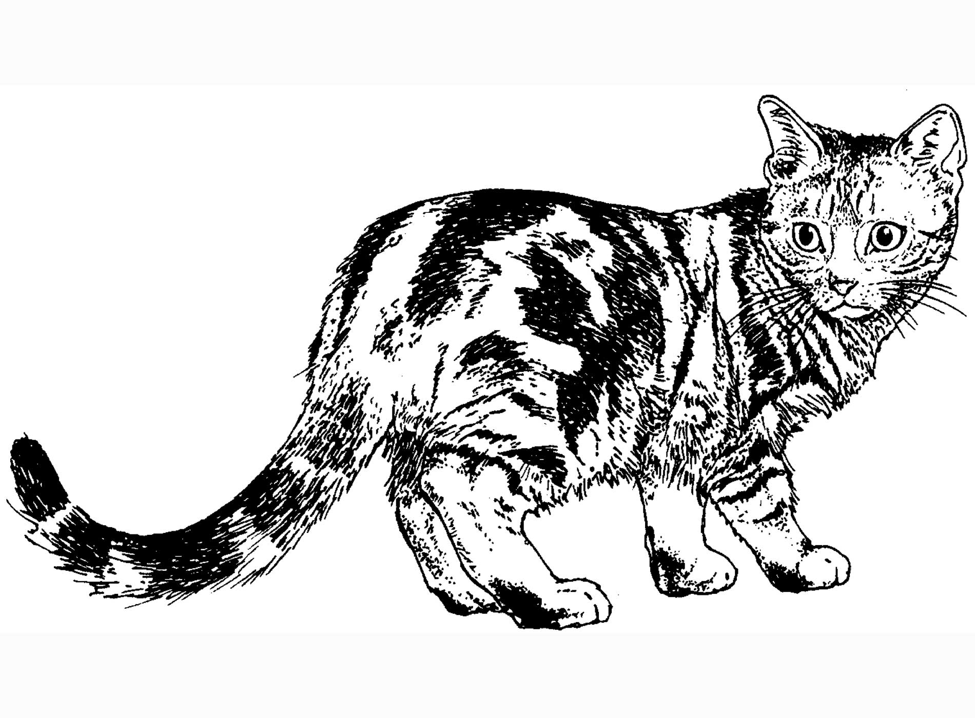 Coloring Realistic Cat Coloring Pages Cat Color Pages