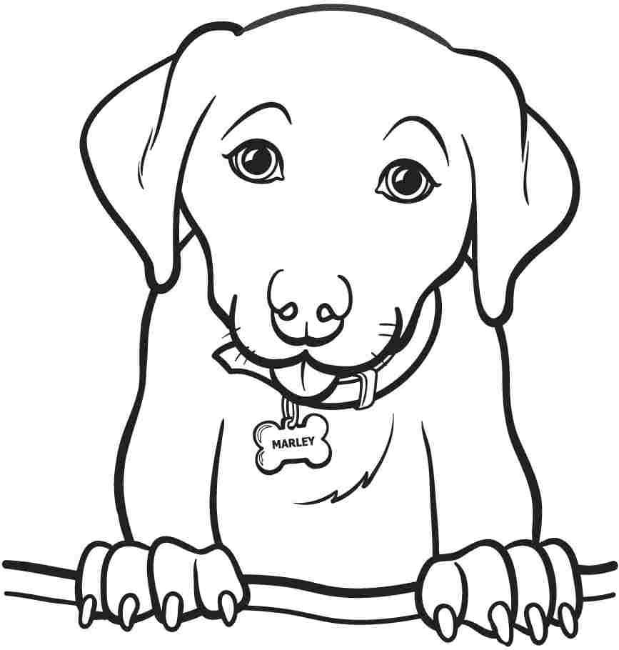Easy Animal Coloring Pages For