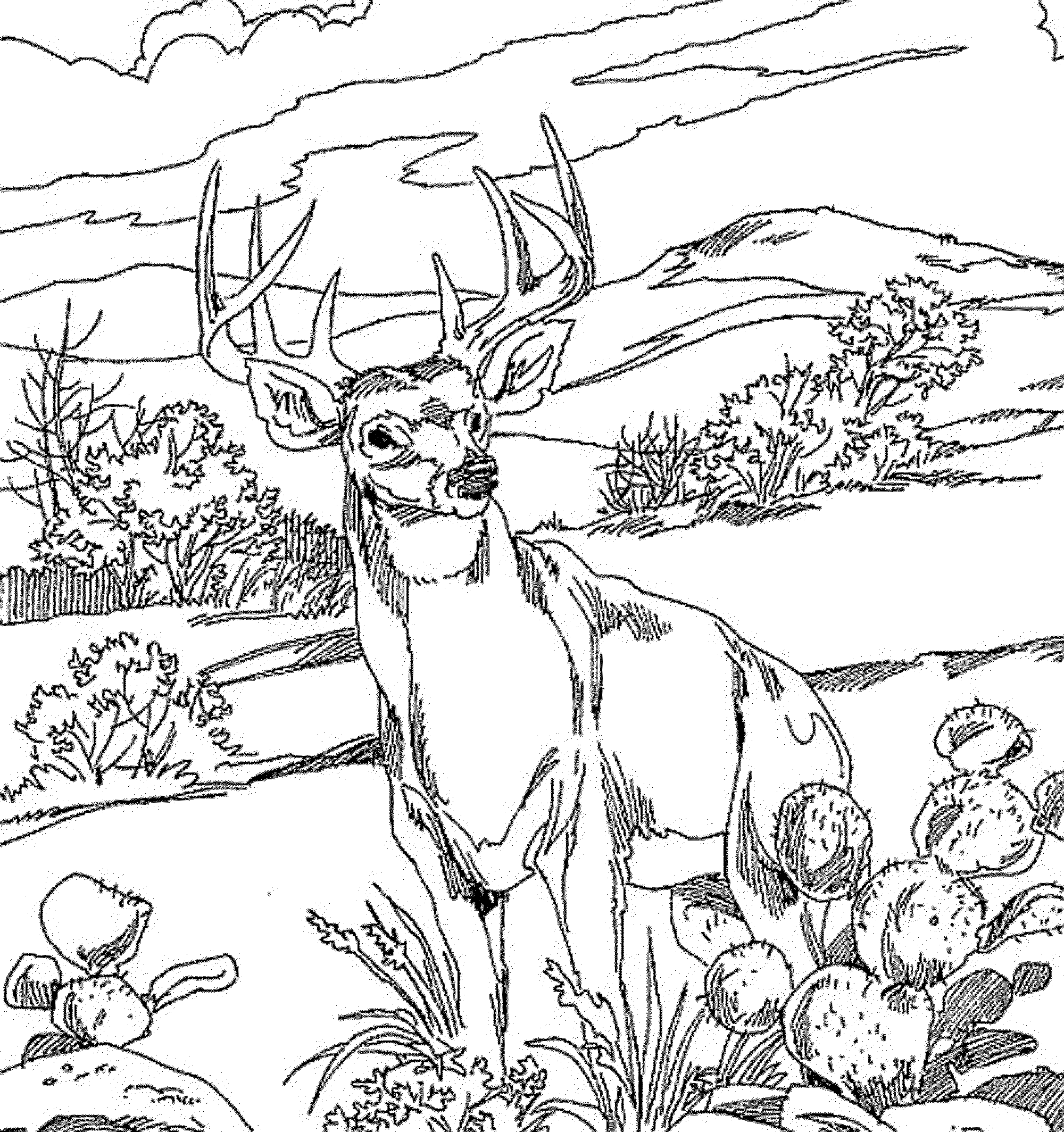 Buck And Doe Coloring Pages Coloring