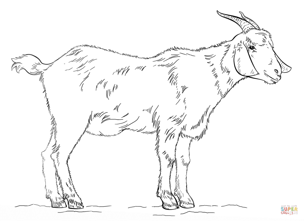Billy Goat Coloring Page Free Printable Coloring Pages - Coloring Home
