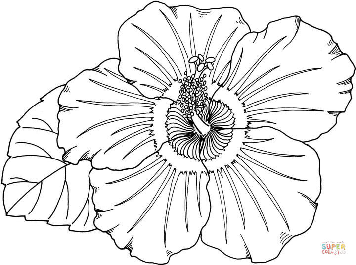 Hibiscus Flower Coloring Page Coloring Home
