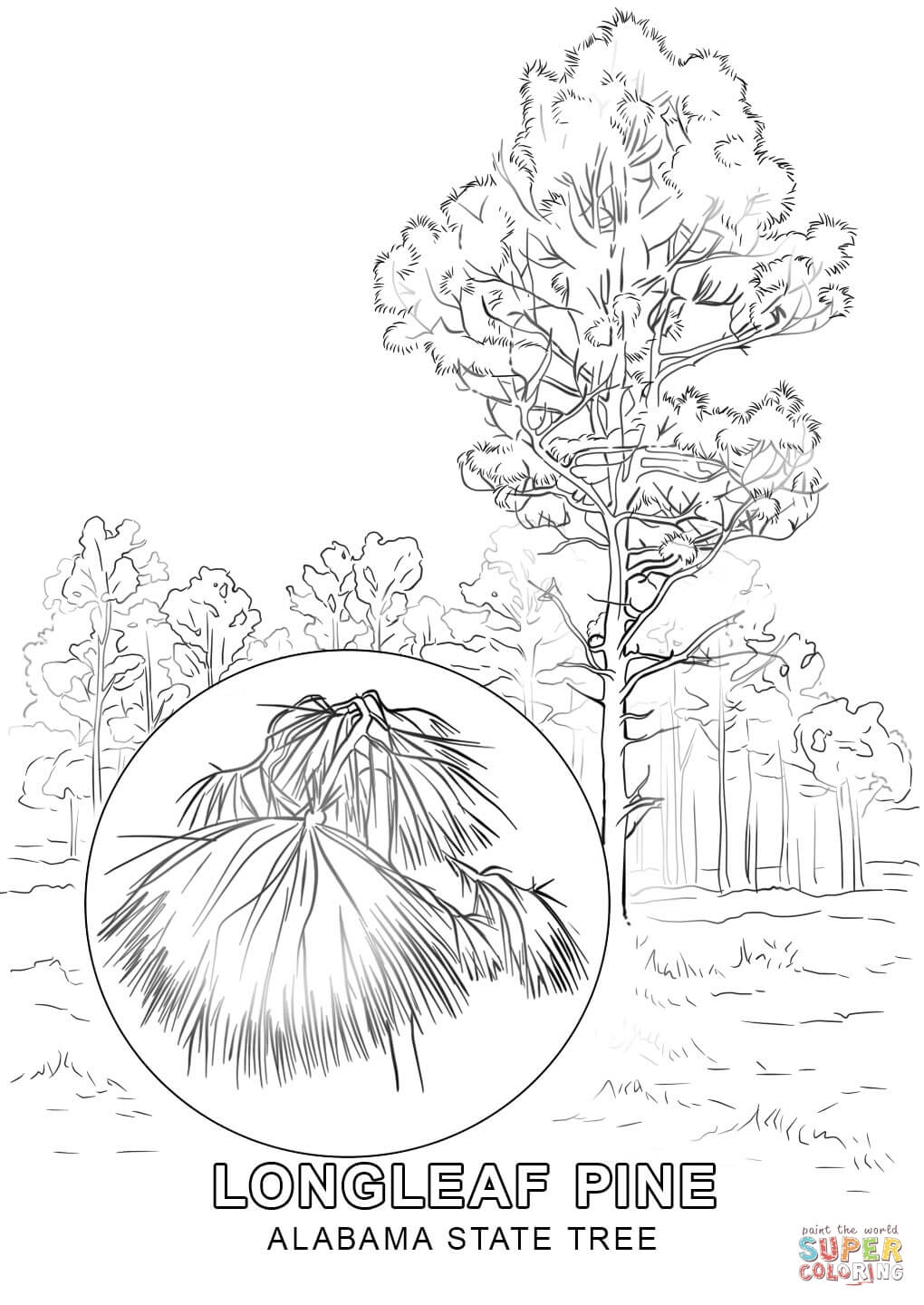 printable state tree coloring pages - photo#19