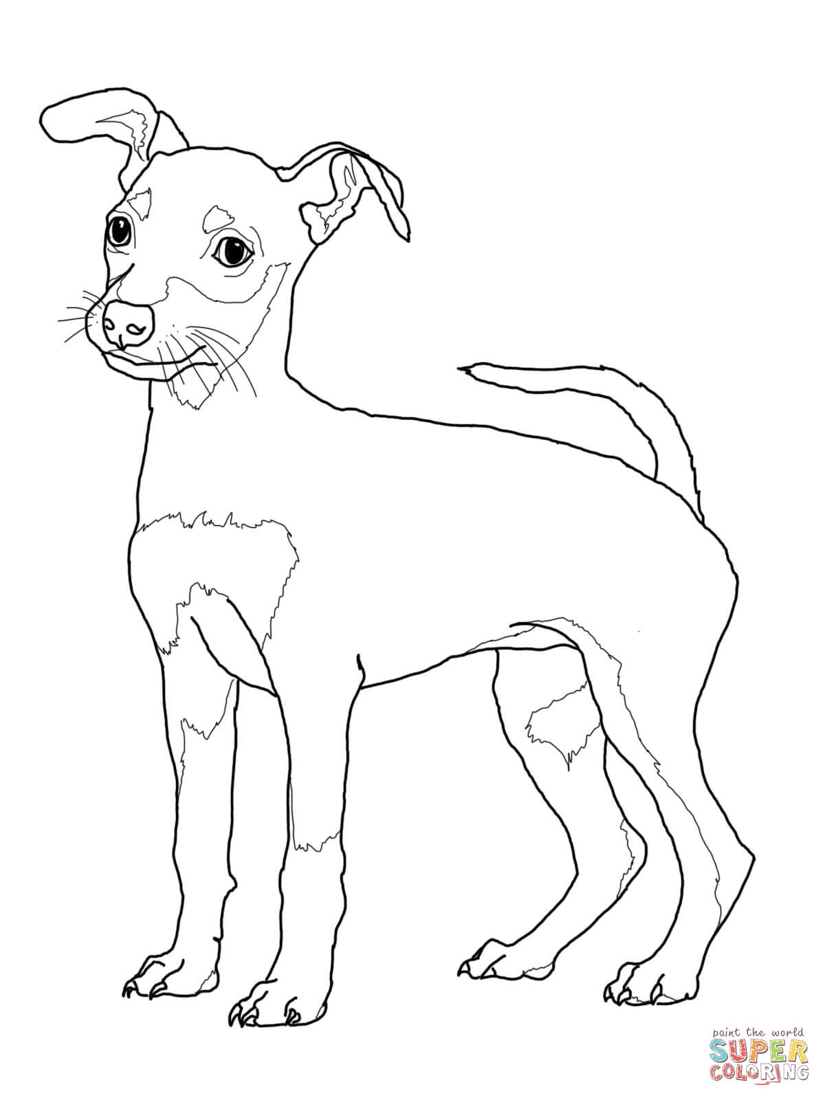 standard miniature and toy poodles coloring page free printable