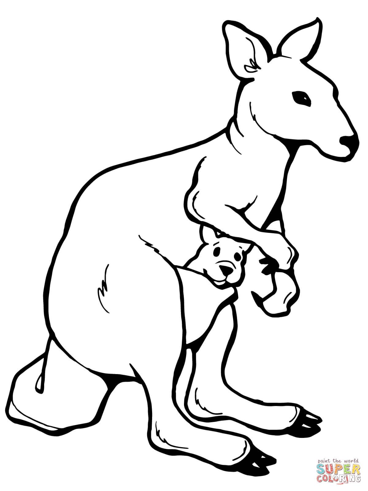 Kangaroo Coloring Page Cute Coloring