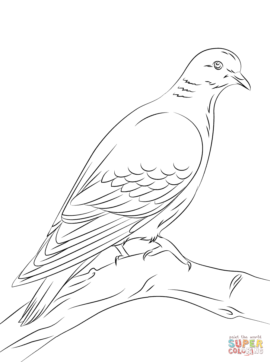 Pages of turtle doves coloring pages coloring pages for Turtle dove template