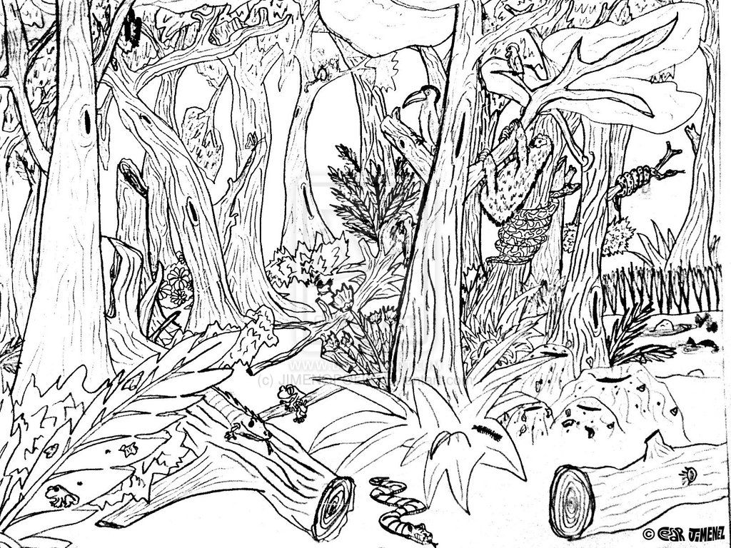Coloring Pages Rainforest Plants Coloring Pages rain forest trees coloring page az pages 11 pics of rainforest pages