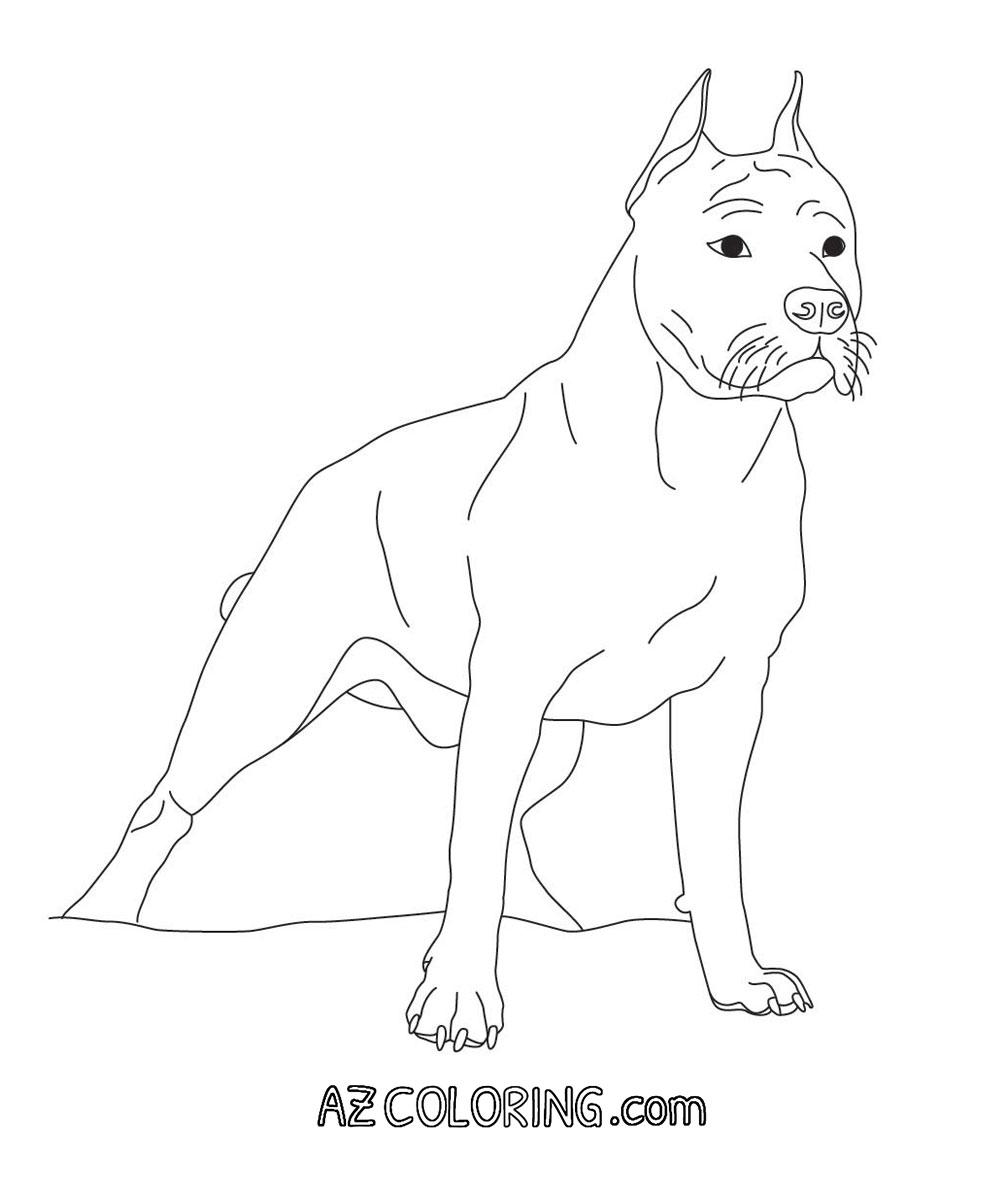 Coloring Pages Pit Bull Coloring Pages coloring pages of pitbulls az pitbull page