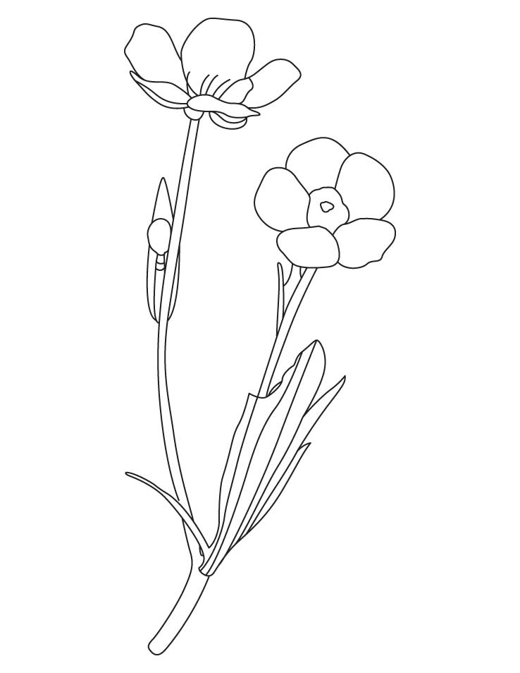Free Printable Buttercup Coloring