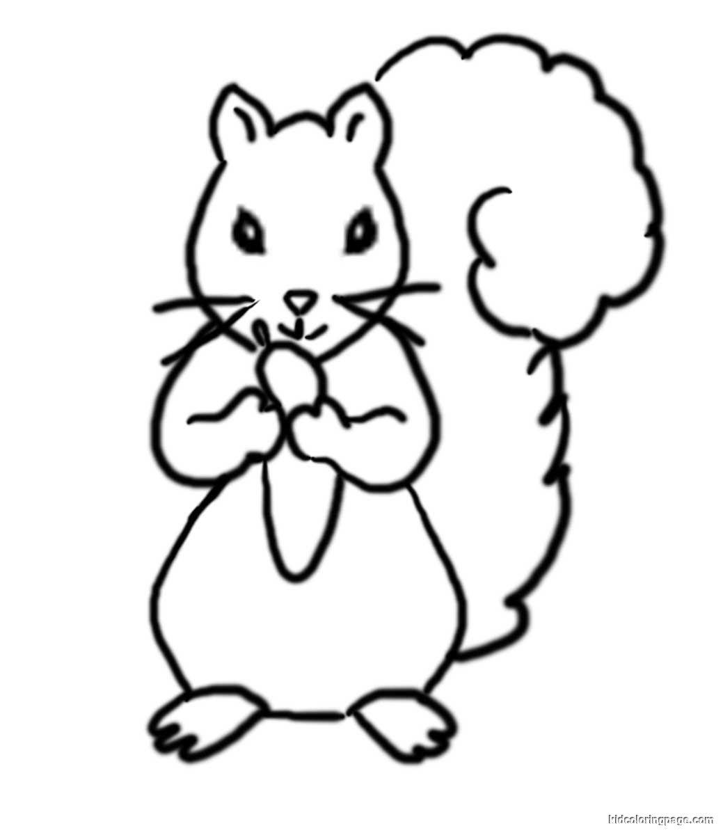 Squirrel Coloring Page For Adults