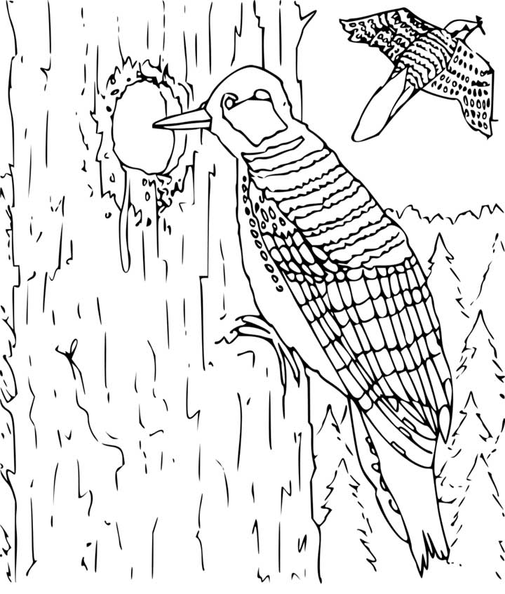 difficult bird coloring pages - photo #44