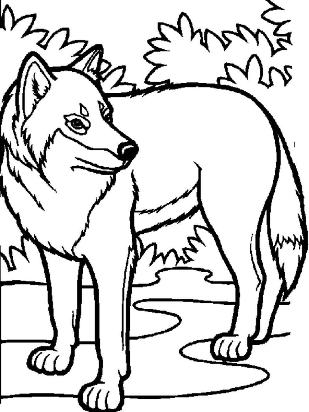 Wolf Coloring Pages Pdf : Print wolf pack team coloring pages printable realistic