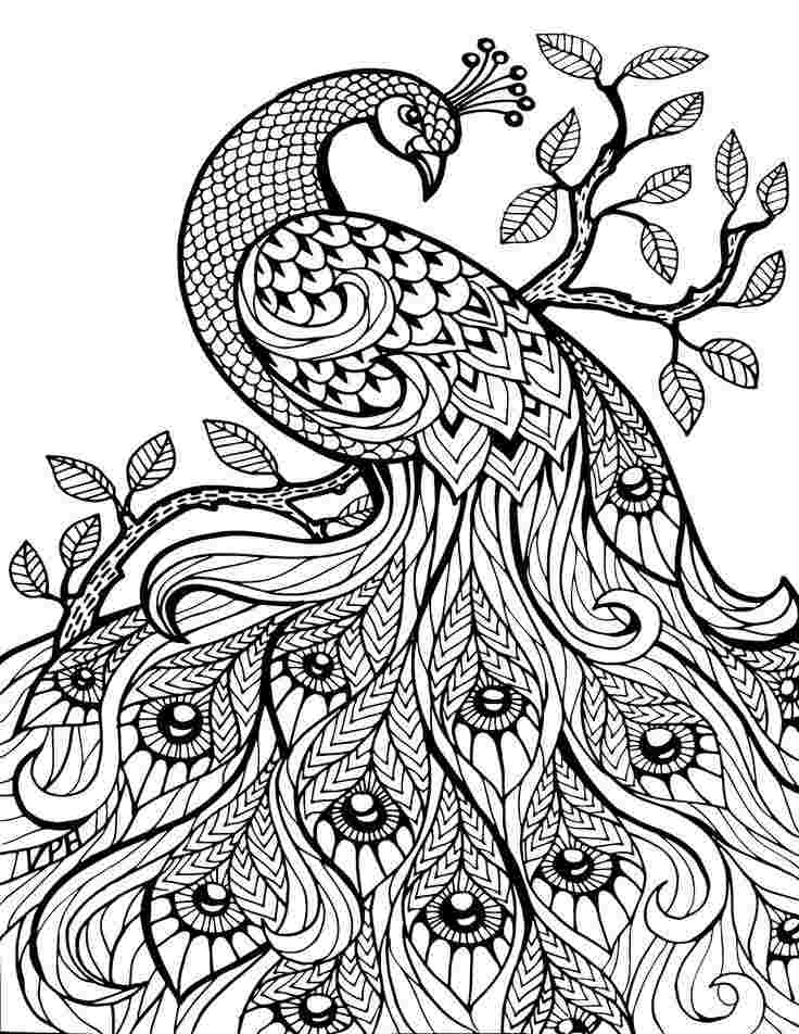 Detail Coloring Pages - Coloring Home