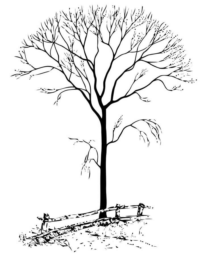 autumn tree coloring page - bare tree coloring page az coloring pages