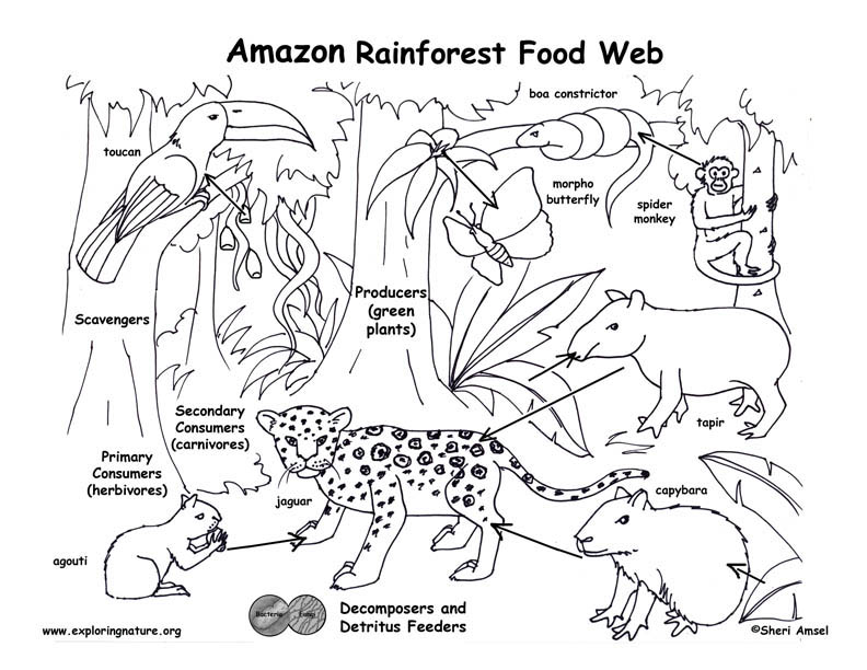food chain coloring pages