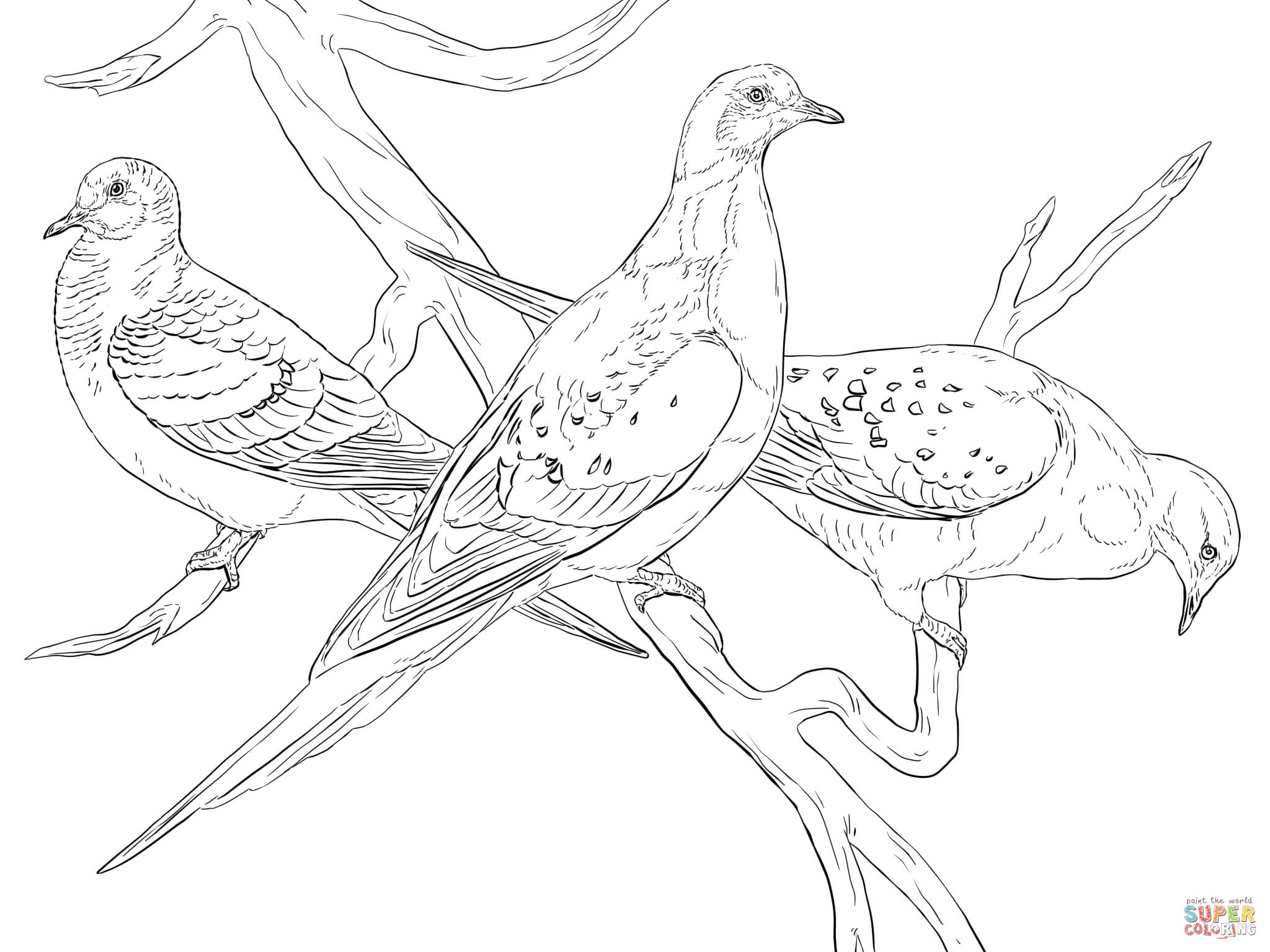 Cute Coloring Pages Of Pigeon Coloring Home