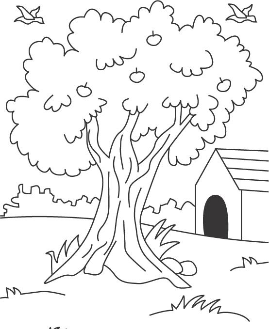 Free Coloring Pages Apple Tree