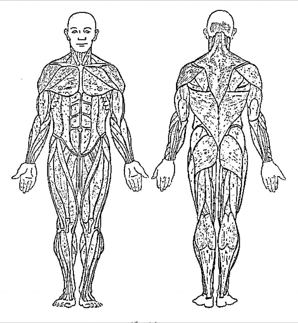 Human Body Systems Coloring Pages - Coloring Home