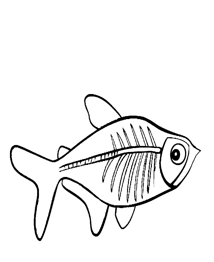 x ray fish coloring page coloring home