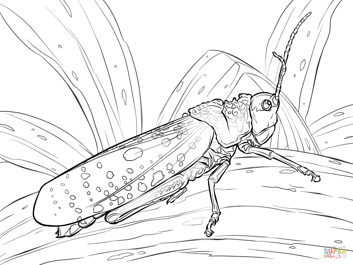 Grasshoppers coloring pages | Free Coloring Pages