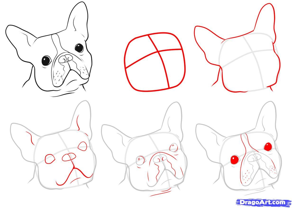How to Draw a Boston Terrier, Step by Step, Pets, Animals, FREE ...
