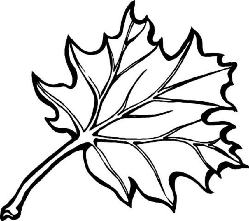 Leaf Coloring Pages Fall Leaves Coloring Pages Printable Leaf ...